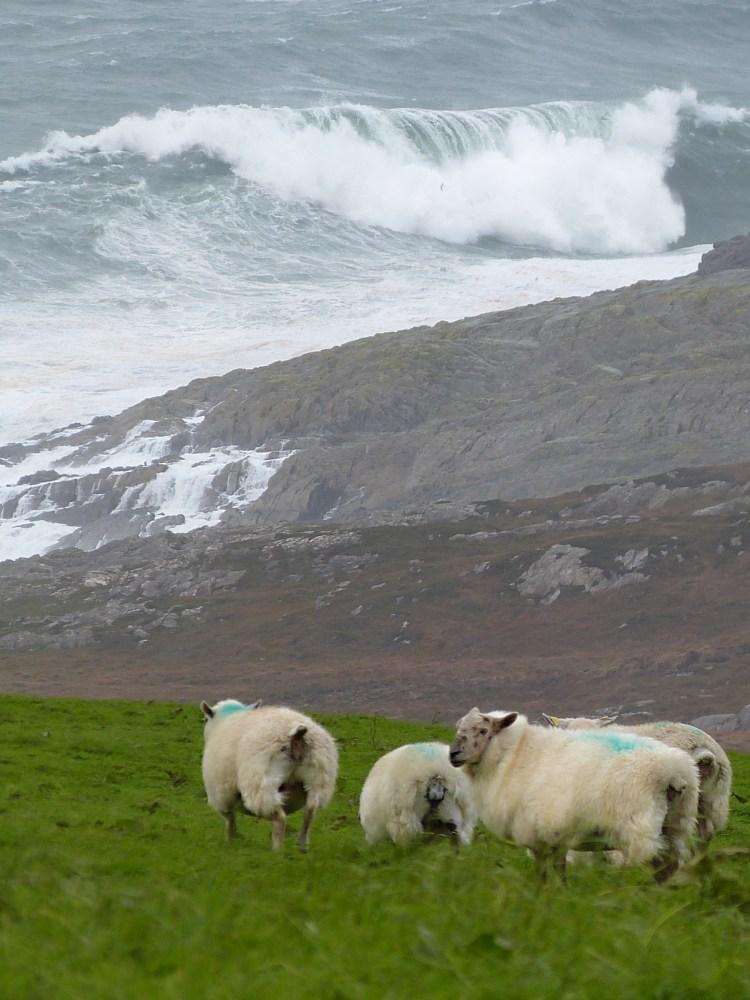 The Mizen Head peninsula Ireland Schull (12)