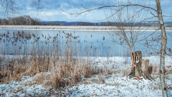 Am Ufer ... (Seerhein, Januar 2017)