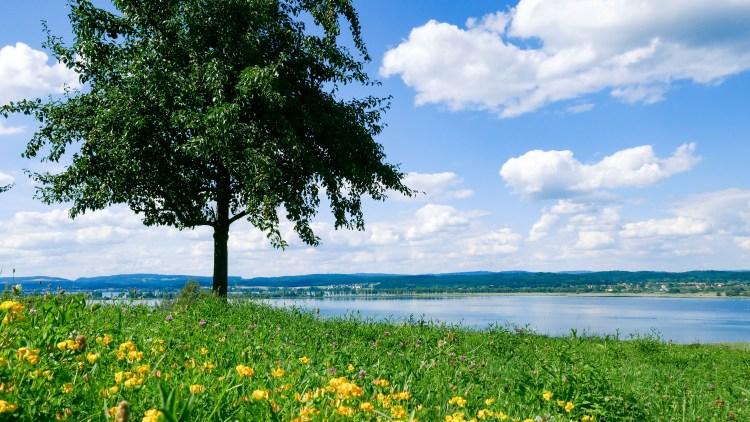 Sommerbaum am Untersee