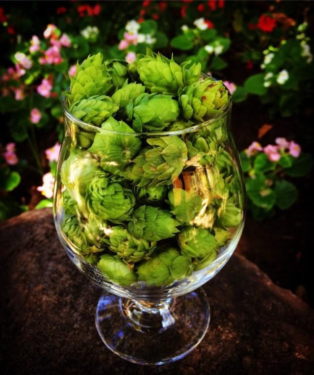 cascade hops
