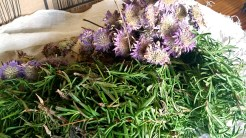 Lemon bee-balm and rosemary before being added to the boil
