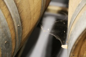 Spiders are a barrelhouse's best friend.