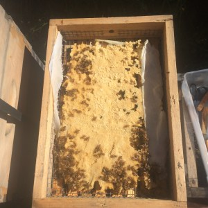 Bees devouring the candy board