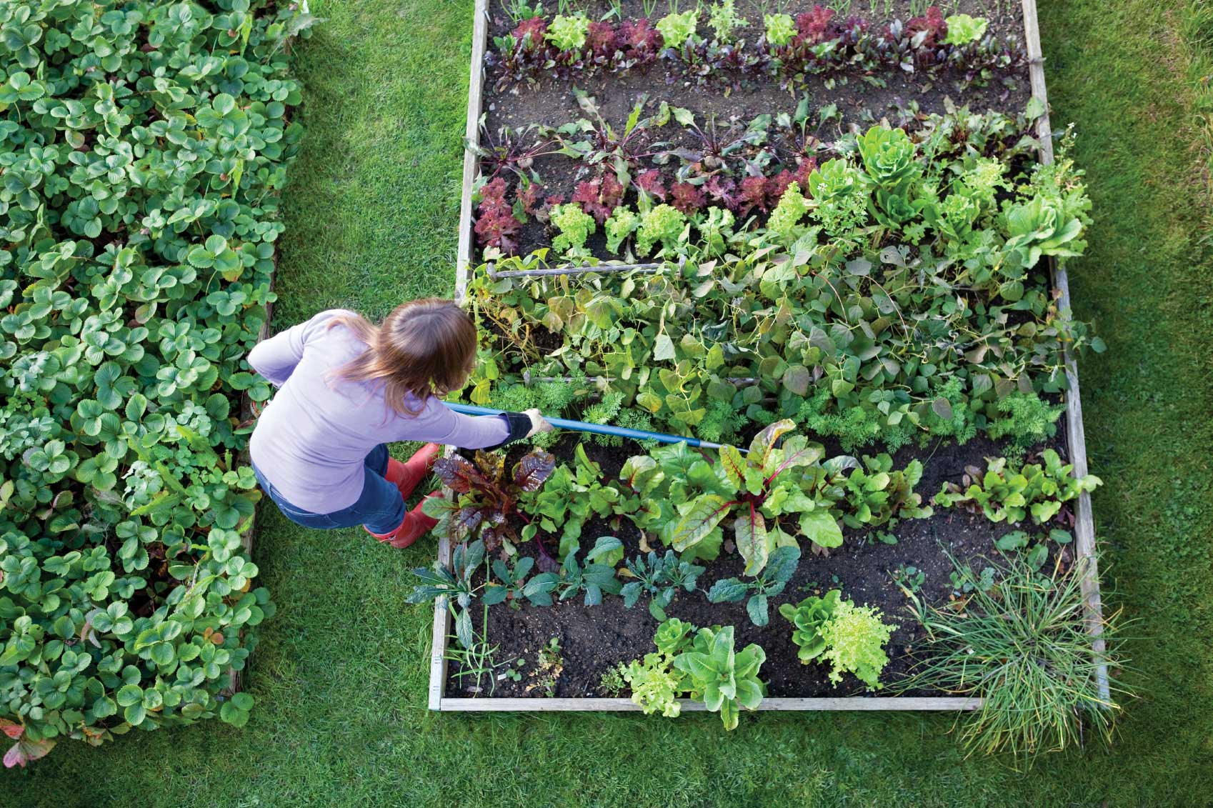 9 Gardening Mistakes that Most People are Making ~ Page 4 ... on Gardening  id=96466