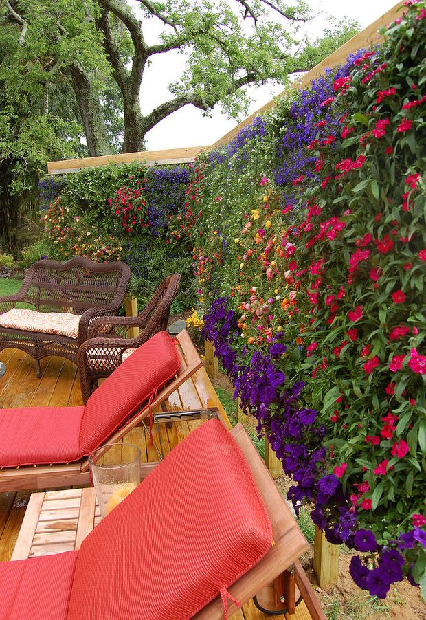 10 Ways to Create Outdoor Privacy-With Plants! ~ Bees and ... on Tree Planting Ideas For Backyard id=81382