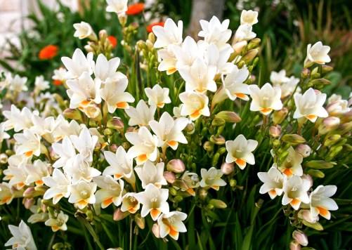 bulbs | spring | gardening | spring gardening | bulbs to plant in spring | garden | flowers | groundcover