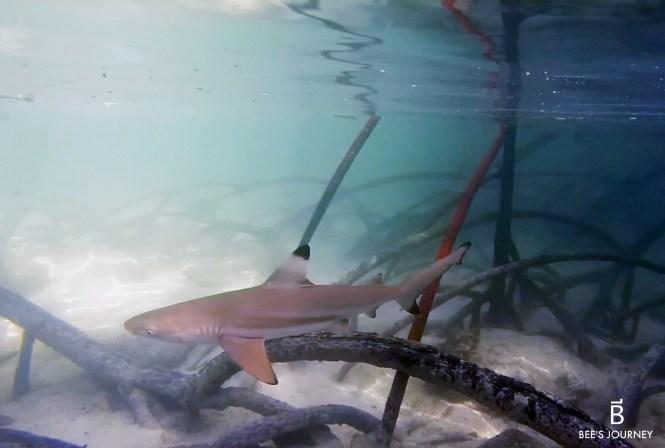 Baby Shark Mu Koh Surin Island Thailand Dream Destination Food Travel Lifestyle Blog