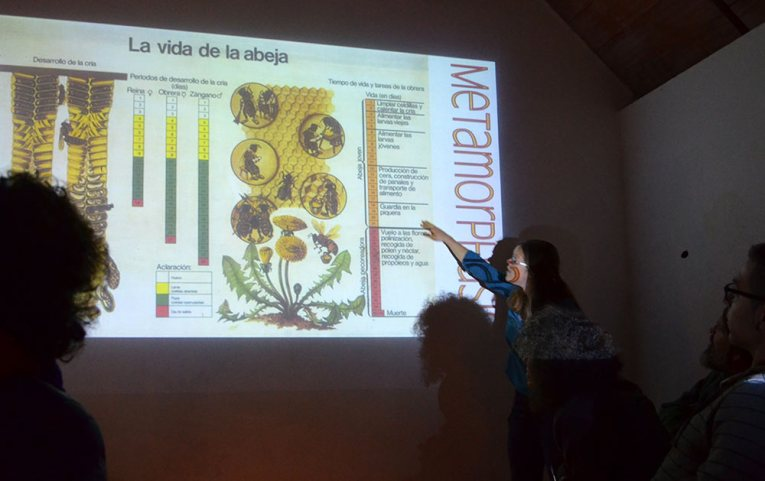 taller-apicultura-natural-1-kathlyn