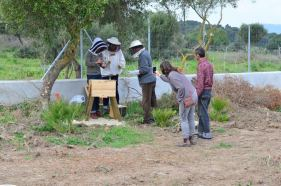 Installing Miguel and Carmen's bees, Spring 2015Installing Miguel and Carmen's bees, Spring 2015