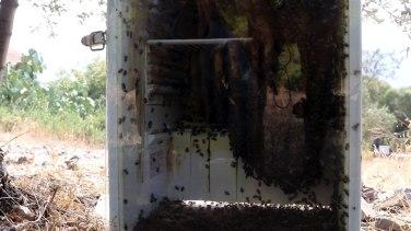 Zonar's fridge hive