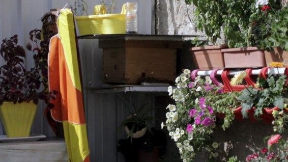 Zahia's beehive is thriving