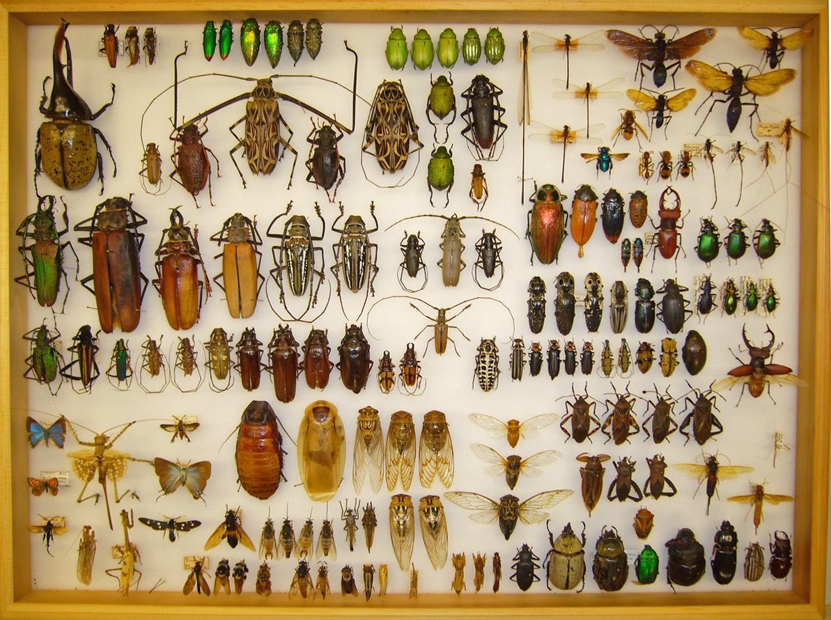 My Collection   Beetles In The Bush My Collection