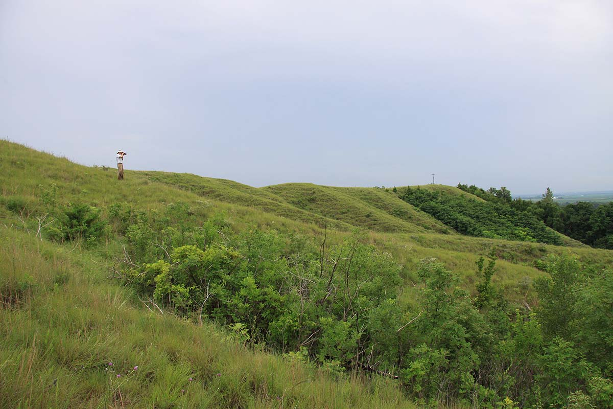 Fieldmate Chris Brown surveys loess hilltop prairie habitat at Star School Hill Prairie Natural Area, Atchison Co., Missouri
