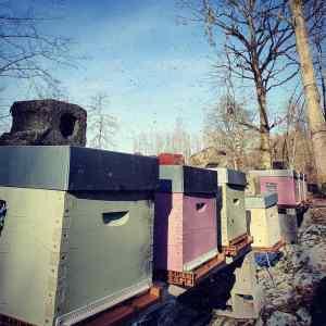 Apiculture ruches Nord parrainage responsable