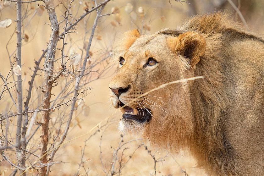 leone-tanzania-safari-africa