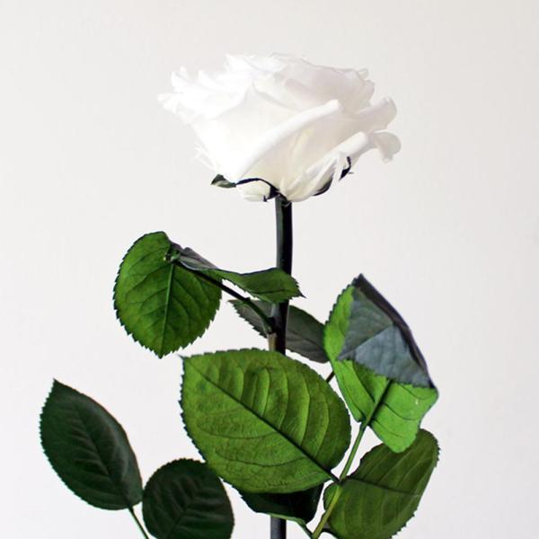 Rosa Preservada Blanco