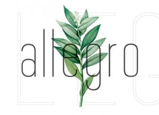 Allegro Sans Serif Font