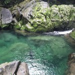 The Riwaka Resurgence: A Place that Will Increase Your Appreciation for Nature