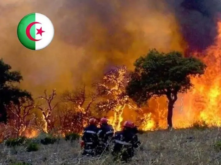 Scientific evidence shows that the fires were carried out by criminal hands