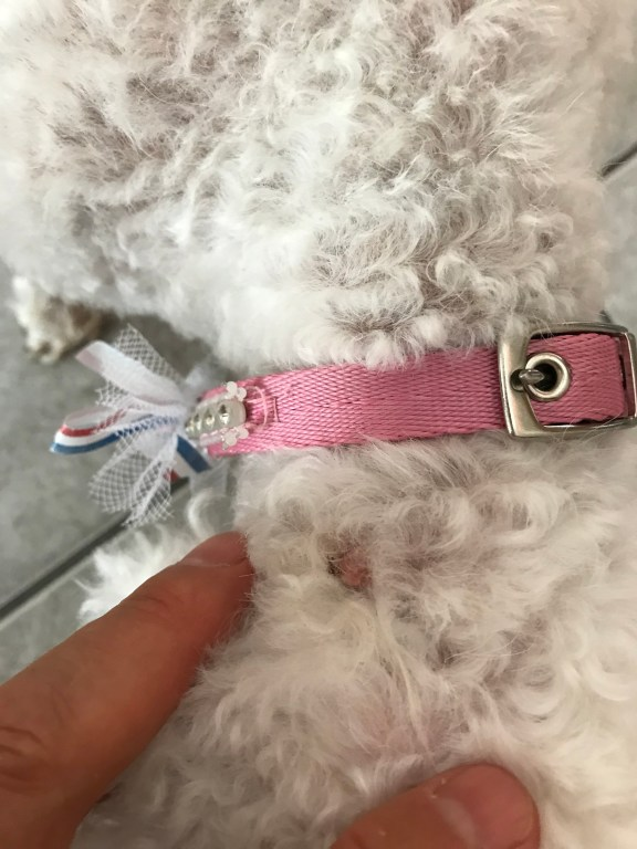 Pickles pink growth and skinny collar