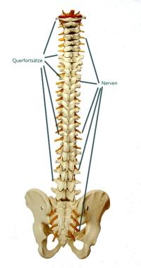 Dorntherapie, Rückenschmerzen mit Dorn behandeln
