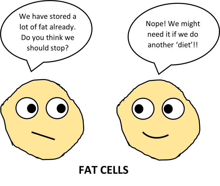 weight gain fat cells