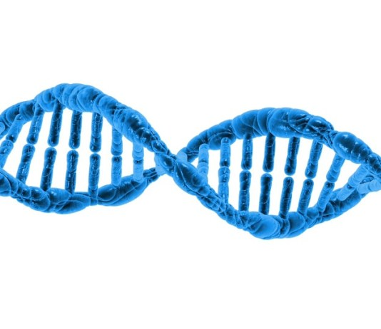 junk dna dna sequences in related animals