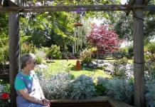 partial shade Old Folk Remedies: Ten Good Choices for Healing Gardens Old Folk Remedies: Native Plants- Healing Gardens