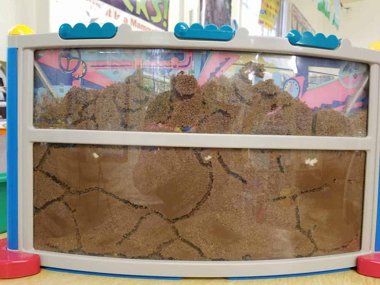 Ant Farm Revival via @behindeveryday