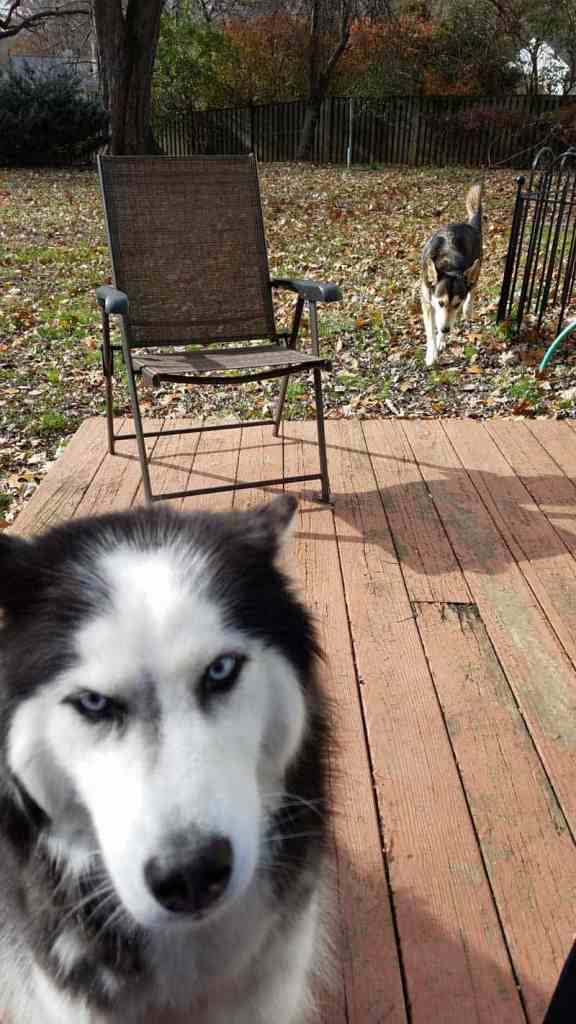 day in the life dogwalking job time