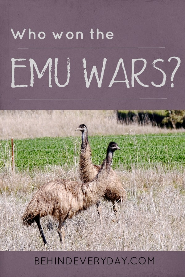 In the never-ending battle between man's expansion and the wildlife, the emus fought back. In 1932 western Australia, emu invaded the wheat fields. The farmers fought back but the emus were victorius in the opening rounds. Learn more about emus and the Emu War of 1932.