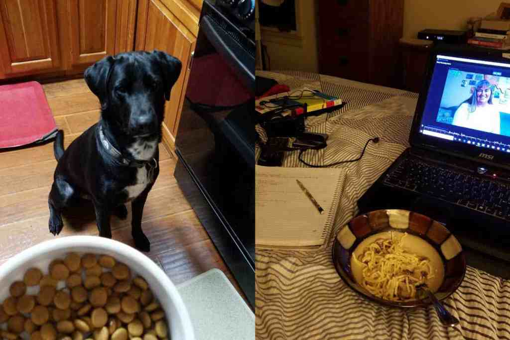 collage of dog with food; dish of food next to laptop