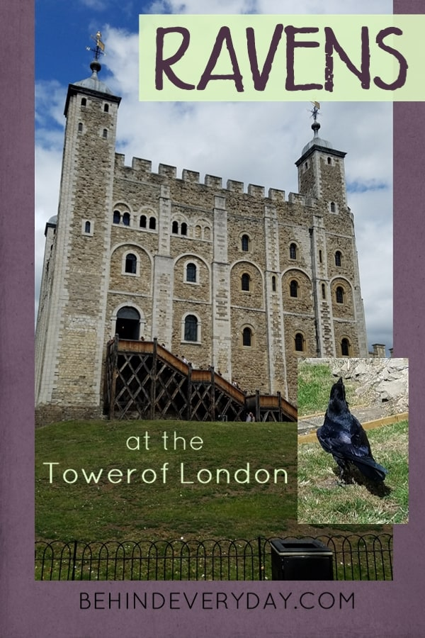Crown jewels and history and legendary ravens await your visit at the Tower of London. Before you go, be sure to read The Ravenmaster by Christopher Skaife to find out the behind-the-scenes details of the Tower ravens and their daily routines and care. Then get right over to the tower and hope you'll be lucky enough to meet Merlina.