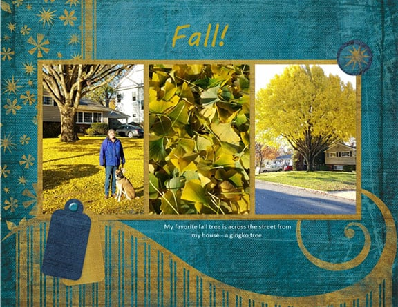 3 photo collage of a yellow-leaved gingko tree in the fall