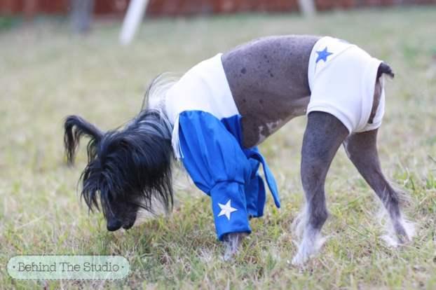 Cookie's Dallas Cowboys Cheerleader Costume