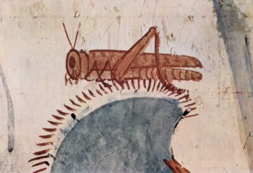 BH77-53-8087-圖2-埃及的蝗蟲.Maler_der_Grabkammer_des_Horemhab_002