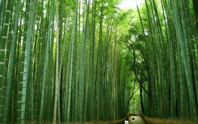 Powerful lessons from the Chinese bamboo story