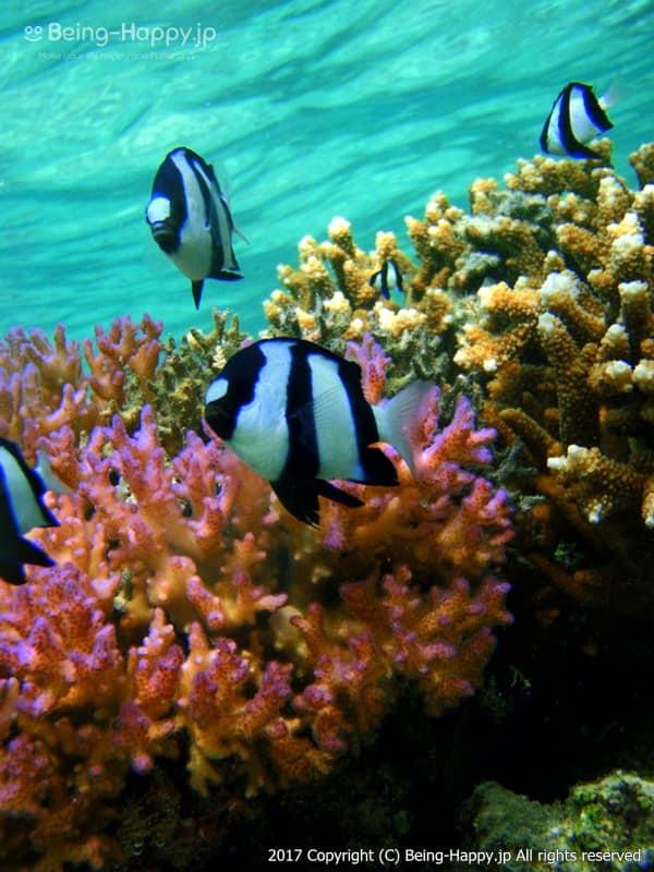 海中で熱帯魚