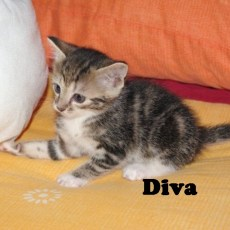 TheCats6_Diva