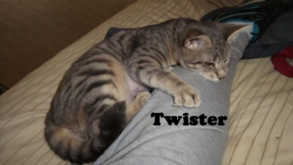 TheCats8_Twister