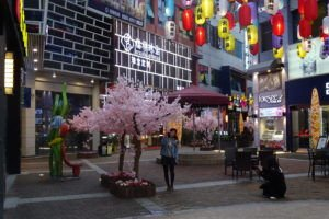Picture of Golden Street, outside Wanda, Fuqing with Cherry Blossom Tree
