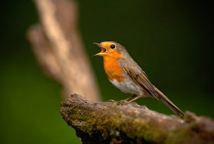 Birdsong - Being At The Cottage