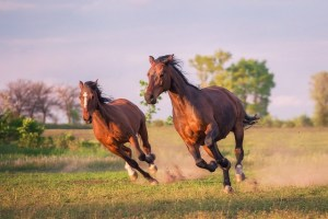 Being at the Cottage Subtle Dynamics Movement matters Two horses galloping