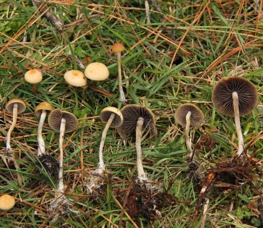 denver, psychedelic, mushrooms, decriminalization