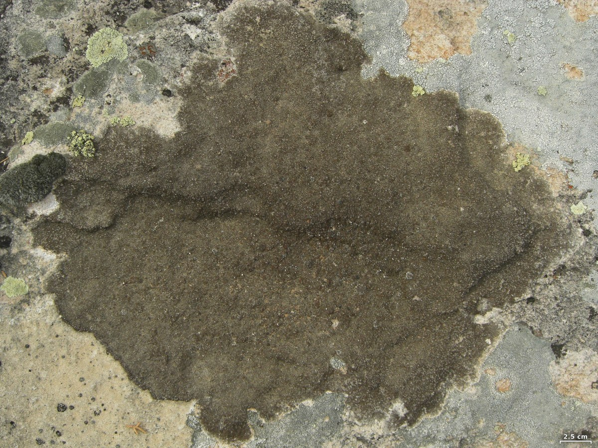What's in an Ecotone? Lichens living on the edge…