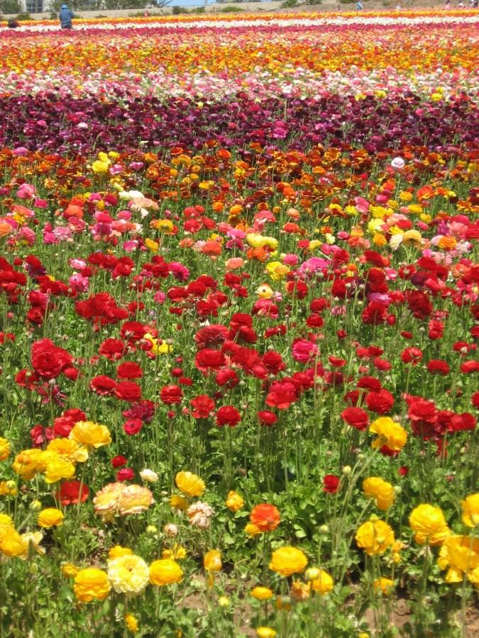 abundance in color