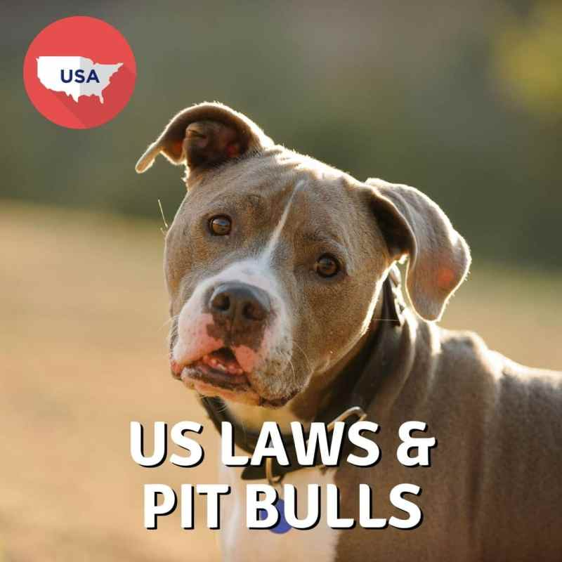 USA Laws and Pit Bulls