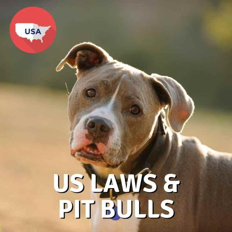 USA Laws and Pit Bulls