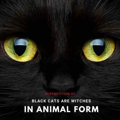 black cat superstition about witches