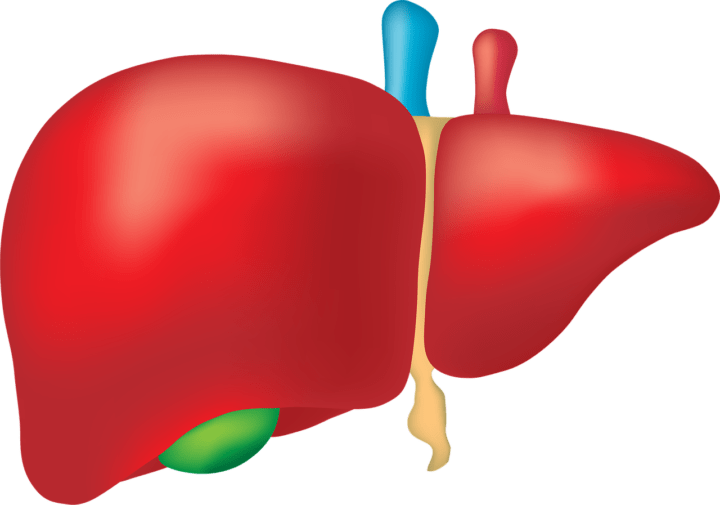 Liver, Fatty liver disease